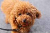 今夜もブログ''犬好き父ちゃんのひとり言''更新しました!