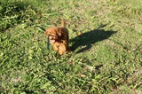 ブログ''犬好き父ちゃんのひとり言''更新しました!