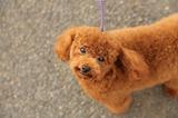 ブログ'犬好きとうちゃんのひとり言'更新しました