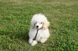 犬好きとうちゃんのブログ、更新しました!