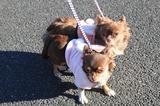 ブログ''犬好きとうちゃんのひとり言''更新しました。