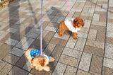 ブログ''犬好きとうちゃんのひとり言''更新しました!