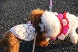 ブログ'犬好きとうちゃんのひとり言'更新しました。